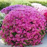 японский сад цветы