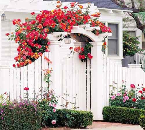 белая калитка и красные цветы