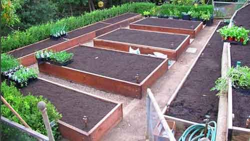 грядки при планировании огорода