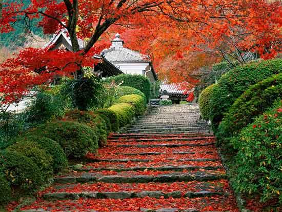 японский сад с японскими кленами