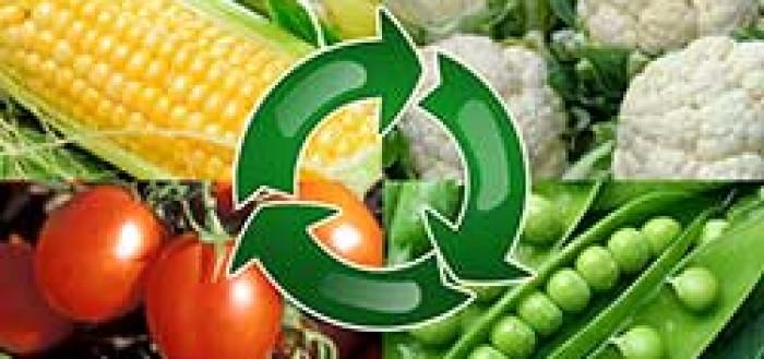 севооборот овощей на участке
