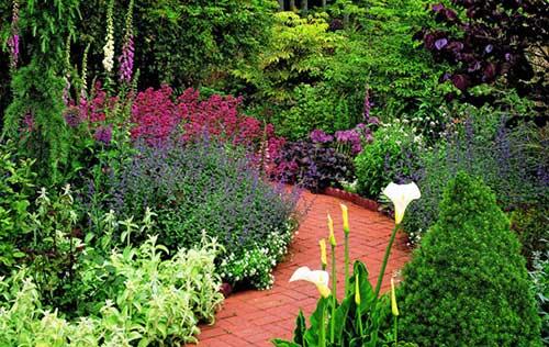 цветы вдоль садовой дорожки