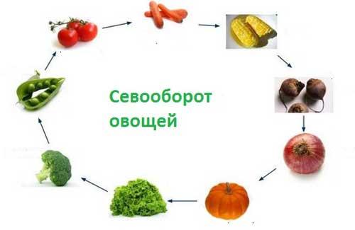 многогодичный севооборот овощей
