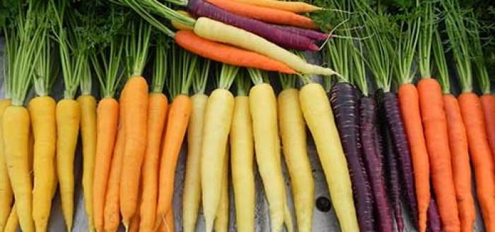 подобрать сорт моркови