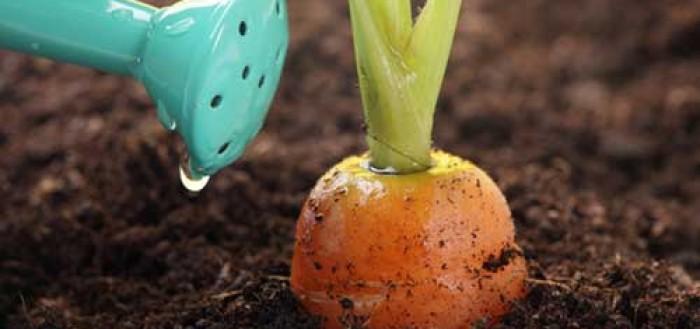когда сеять морковь
