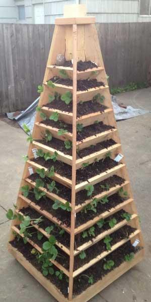 высокая пирамида для клубники