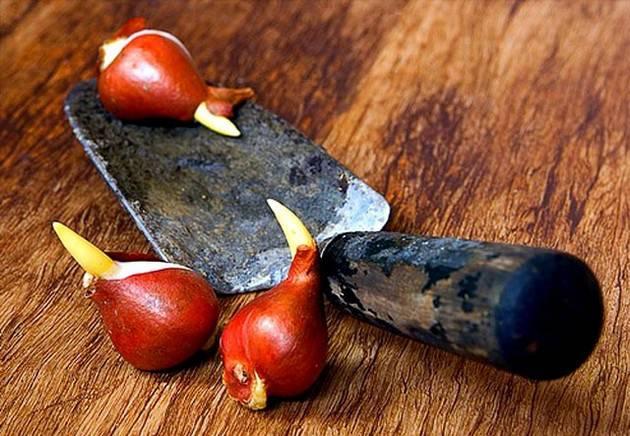 работы осенью в цветнике высадка луковиц