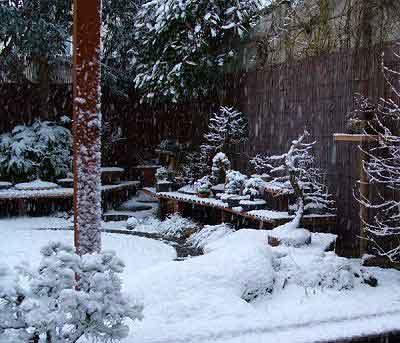 зимовка бонсай на улице