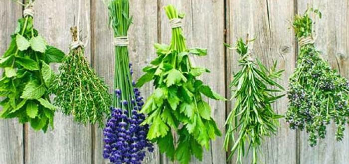 травы для чая выращивание