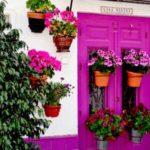 фиолетовая входная дверь