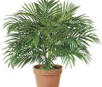 бамбуковая пальма для детской комнаты