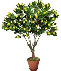 растения полезные для детской