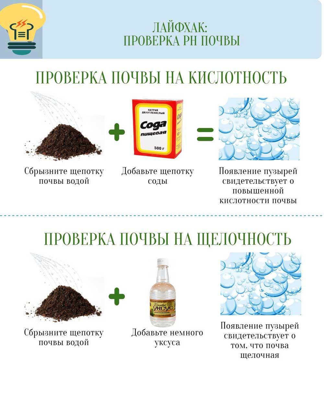 Лайфхак: проверка PH почвы