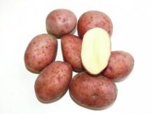 картофель сорта бронницкий