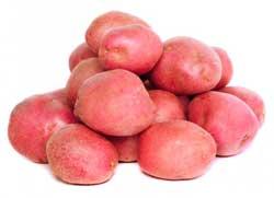 картофель сорта глория
