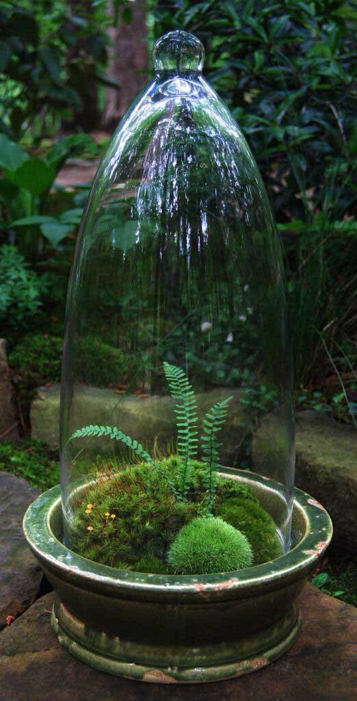 флорариум с папоротником