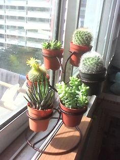 на каком окне размещать кактус