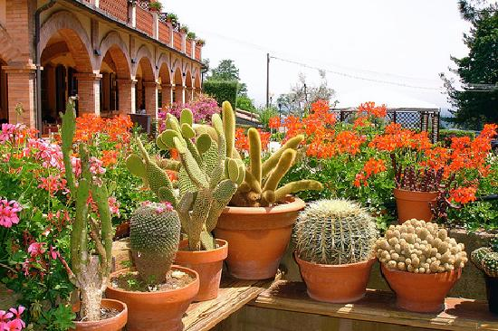уход за кактусами весной