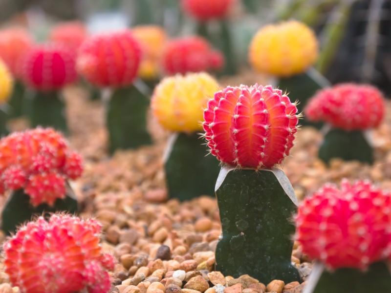 почва для кактусов.