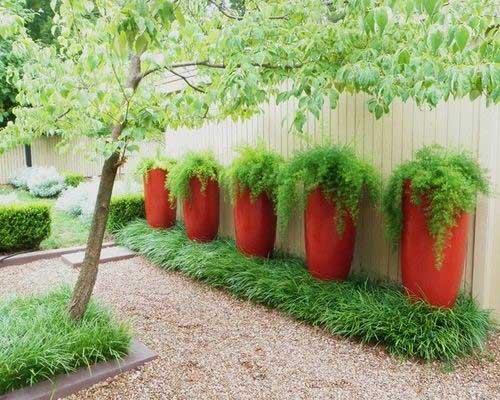 Выращивание уличных растений в горшках 81