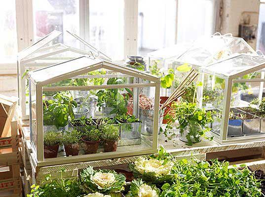 парник для комнатных растений