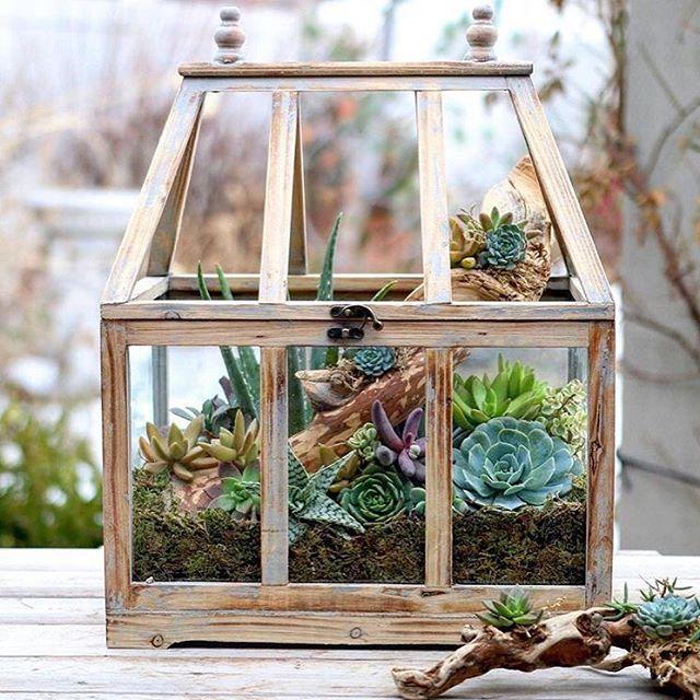 теплица для комнатных растений