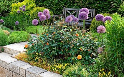 розы и декоративный лук