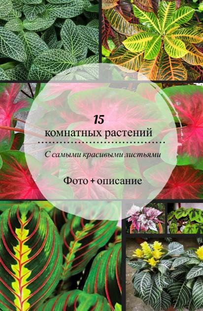 комнатные растения с декоративными листьями